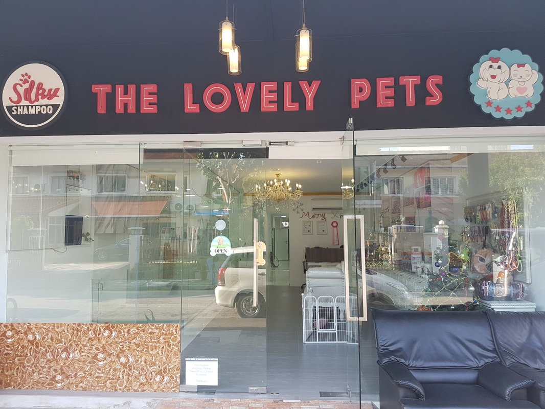 Best place to buy puppies in Singapore sg