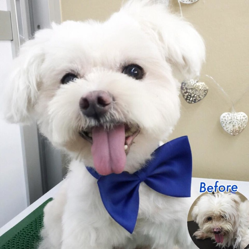 quality dog grooming in singapore is very high